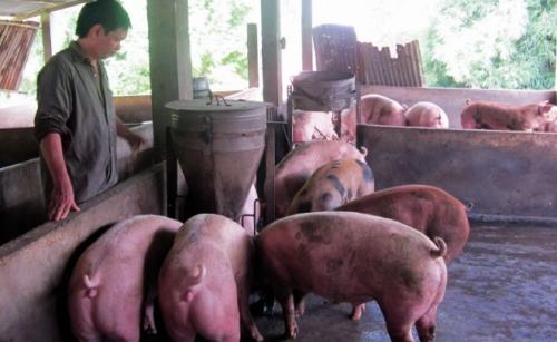 Chăn nuôi cũng phải hướng tới xuất khẩu