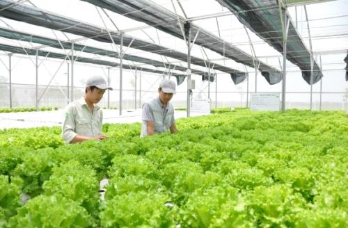 Dòng chảy tín dụng nông nghiệp tăng mạnh