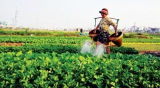 Kinh tế tập thể: Cần một hệ sinh thái để liên kết hiệu quả