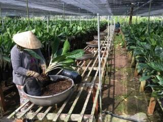 Tín dụng nông nghiệp vào mô hình hội quán