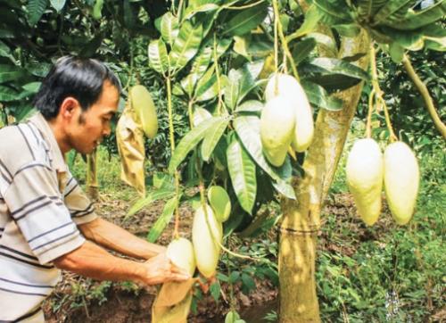 Chìa khóa để nông sản Việt tiếp cận thị trường châu Âu