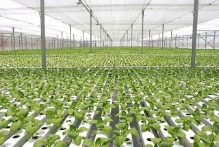 Hỗ trợ chuyển dịch cơ cấu nông nghiệp đô thị