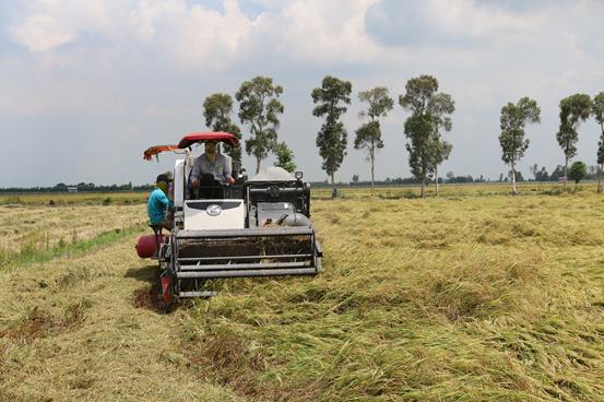 Agribank đảm bảo cung ứng đủ vốn cho doanh nghiệp kịp thời thu mua lúa, gạo