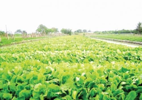 TP. Hồ Chí Minh: Phát triển du lịch nông nghiệp công nghệ cao