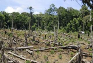 Nỗi đau của rừng