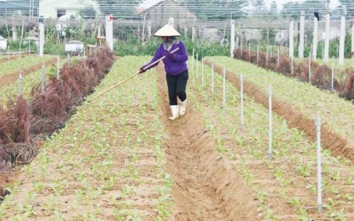 Khẳng định vị thế cho nông sản sạch