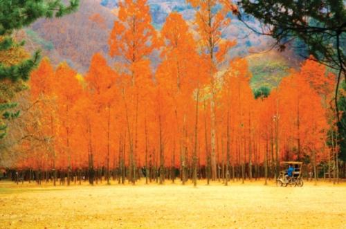 Sôi động trải nghiệm du lịch mùa thu