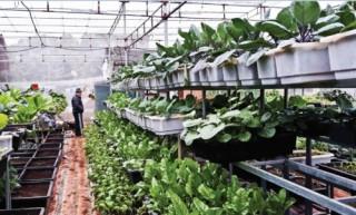 Thu hút đầu tư sản xuất nông sản sạch