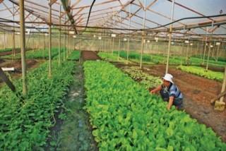 TP. Hà Nội: Đẩy mạnh sản xuất nông nghiệp hữu cơ