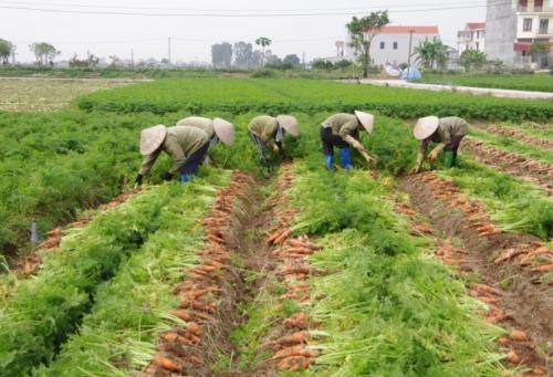 Chưa giải được bài toán xuất khẩu nông sản thô, giá trị gia tăng thấp