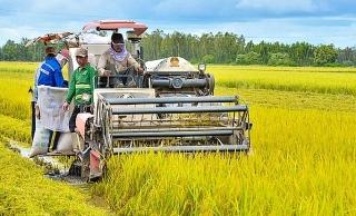 Nông nghiệp vẫn là trụ đỡ của nền kinh tế
