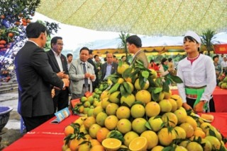 Ngành Ngân hàng Hòa Bình: 25 năm đồng hành cùng sự phát triển kinh tế của tỉnh
