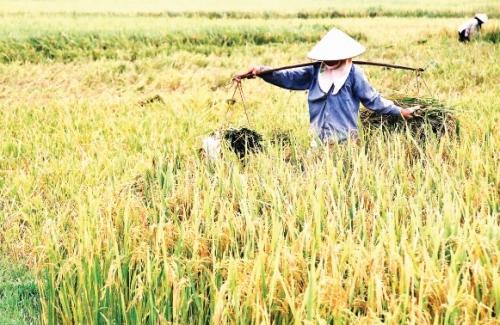 DN xuất khẩu gạo gia tăng giá trị thương phẩm