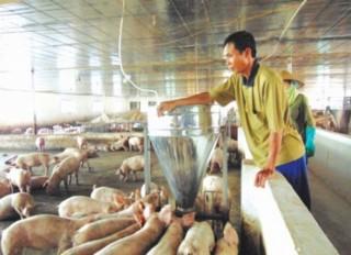 Mở rộng thị trường cho ngành chăn nuôi