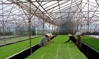 Thị trường cho đất nông nghiệp vẫn khó
