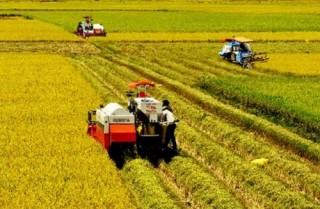 Tái cơ cấu nông nghiệp: Chuyển biến tích cực và căn bản