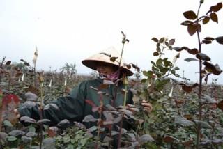 Hà Nội: Tích cực hoàn thành mục tiêu đạt chuẩn nông thôn mới năm 2019