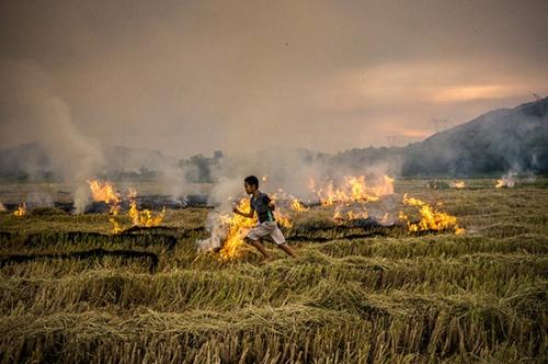 Nhớ những mùa khói đốt đồng