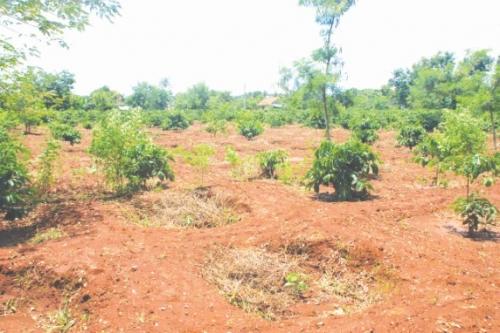 Nan giải bài toán thu hồi đất rừng
