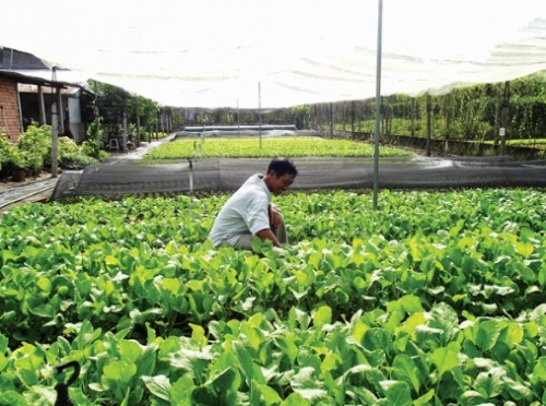 Phát triển bền vững chuỗi liên kết
