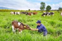Cùng gia đình Xuân Bắc khám phá trang trại Vinamilk Organic Đà Lạt