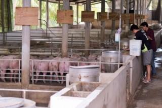 Agribank Bến Tre giảm lãi suất hỗ trợ người chăn nuôi