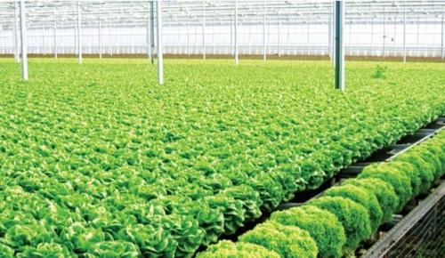 """Đầu tư nông nghiệp công nghệ cao: Cuộc """"chạy vượt rào"""" nhiều thách thức"""