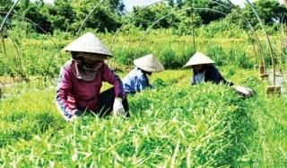 Nút thắt trong nông nghiệp công nghệ cao