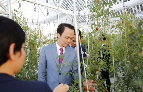 FLC - Farmdo bắt tay làm nông nghiệp