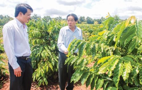 Agribank Đăk Lăk giúp nông dân làm giàu