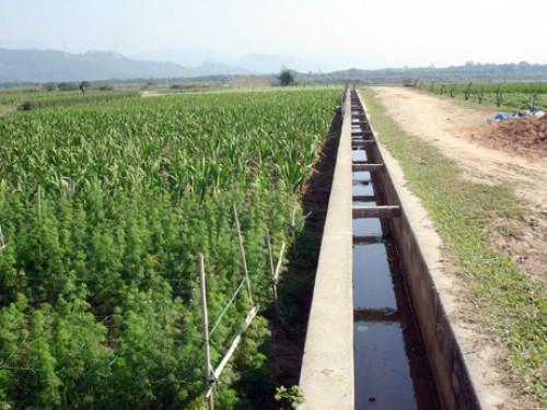 Đầu tư nông nghiệp: Ngoại e dè, nội ngán ngẩm