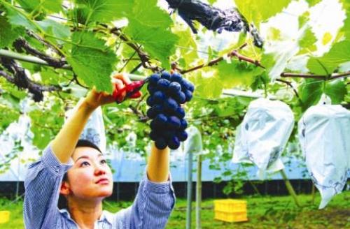 Nhật mở rộng đầu tư vào nông nghiệp