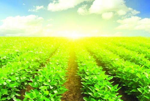 Khuyến khích nông nghiệp không chỉ bằng vốn