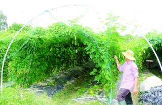 Tiếp vốn cho nông nghiệp sạch