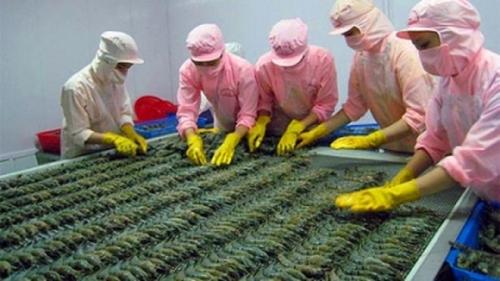 Lệnh cấm nhập khẩu tôm: Việt Nam yêu cầu Úc xem xét lại