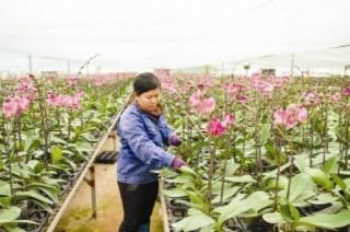 Gỡ vướng cho tín dụng nông nghiệp công nghệ cao