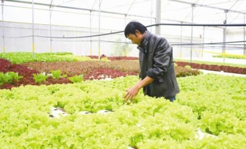 Đầu tư nông nghiệp công nghệ cao: Cần đột phá về cơ chế