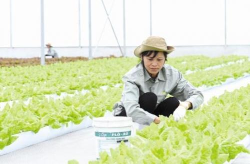 Hỗ trợ phát triển nông nghiệp sạch ở Quảng Trị