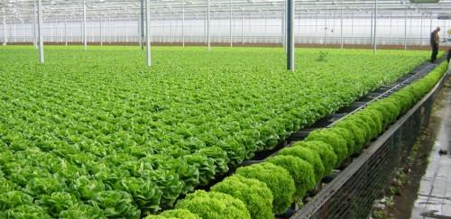 Nông nghiệp hữu cơ hấp dẫn vốn ngoại
