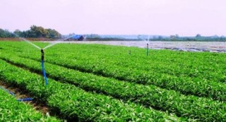 Nâng cánh cho nông nghiệp công nghệ cao