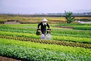 Sự thụt lùi của nông nghiệp