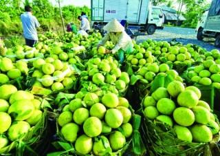 Chắp cánh nông nghiệp công nghệ cao