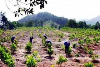 Tìm kiếm cơ hội kinh tế từ rừng