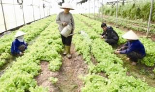 Xây dựng nền nông nghiệp sạch bền vững