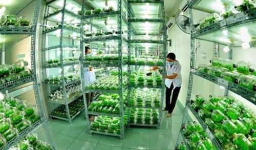 Nan giải lực hút vốn nông nghiệp công nghệ cao