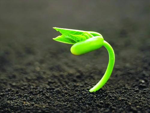 Phát triển nền nông nghiệp sạch: Cần có chính sách đồng bộ