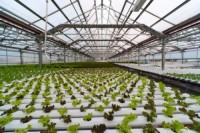 Đầu tư cho nông nghiệp 4.0 đã sẵn sàng