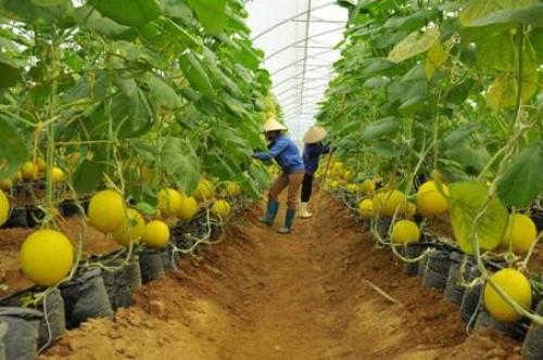 Hiện thực hóa giấc mơ đổi đời của nông dân