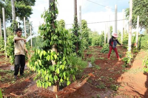 Cơ hội cho tài chính xanh phát triển