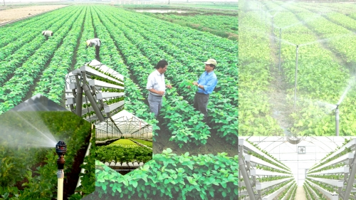 Thúc đẩy tài chính toàn diện nông nghiệp, nông thôn